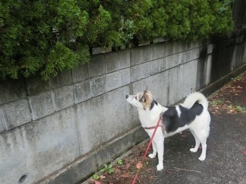 2017-09-17 散歩 017 (480x360)