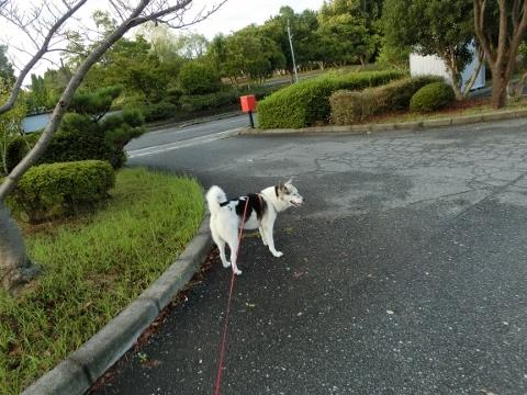 2017-09-18 散歩 006 (480x360)