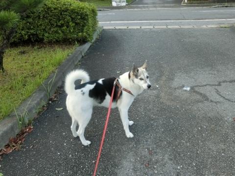2017-09-18 散歩 008 (480x360)