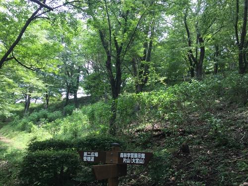 里山紫陽花10