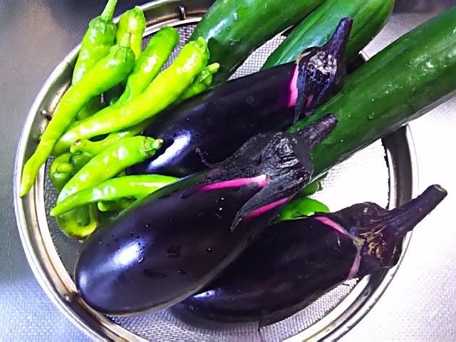 夏野菜17-7-24