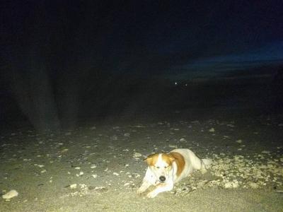 愛犬サンゴ