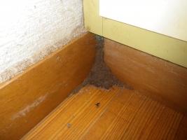 室内の蟻道