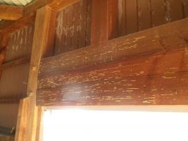 倉庫のイエシロアリ被害