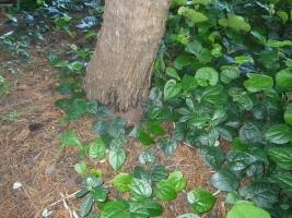敷地外の樹木