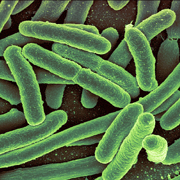 大腸菌pixabay