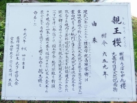 筆甫の親王桜2017_2