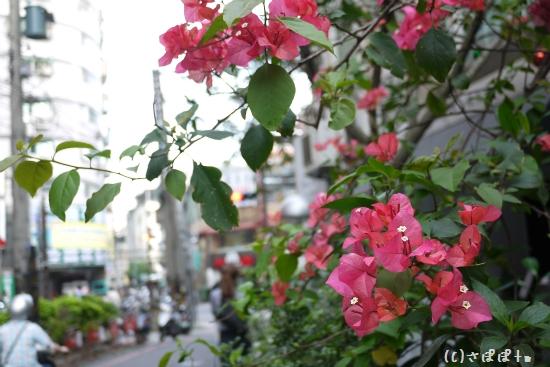 楊家麺食水餃館23