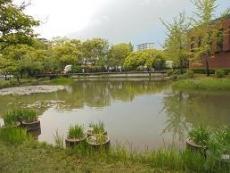 ブログ16菖蒲池