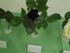 ブログ32黒バラ