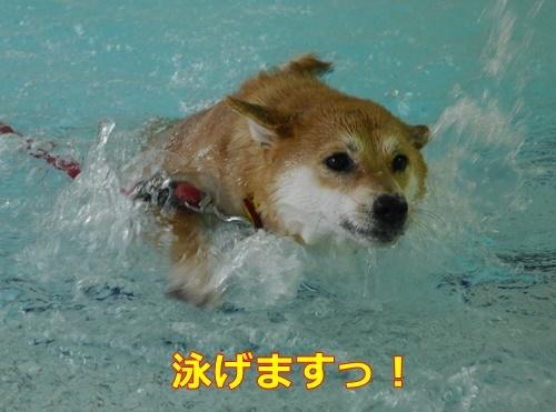 5泳げます