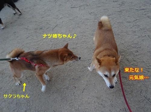 3ナツ姉ちゃん