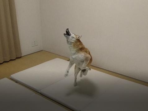 たもつジャンプ (2)