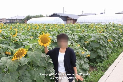 himawari170731-1836.jpg