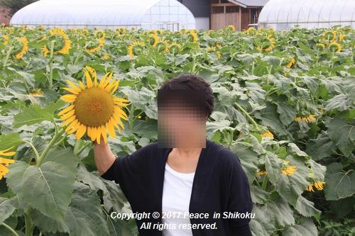 himawari170731-1838.jpg