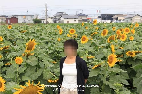 himawari170731-1839.jpg