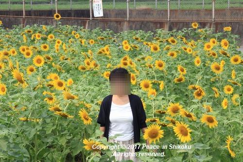 himawari170731-1842.jpg