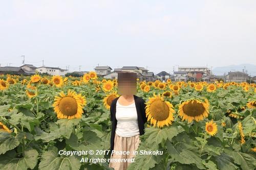 himawari170731-1848.jpg