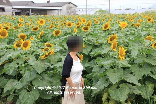 himawari170731-1859.jpg