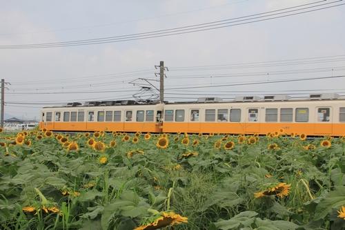 himawari170731-1866.jpg