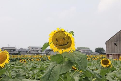himawari170731-1914.jpg