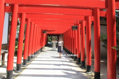 tamura-0529-9686.jpg
