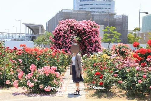 tamura-0529-9775.jpg