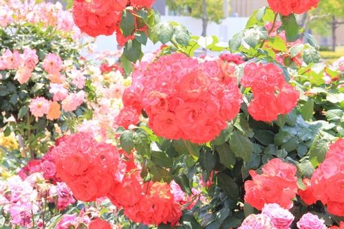 tamura-0529-9779.jpg