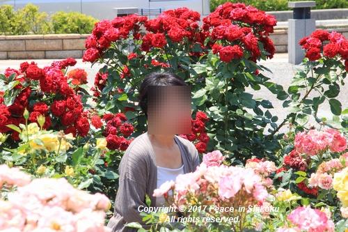 tamura-0529-9790.jpg