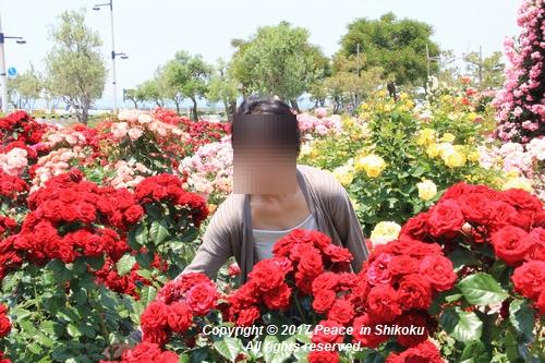 tamura-0529-9798.jpg