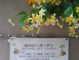 honey-bee-garden.jpg