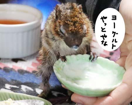 シマリス食べる