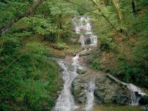 水の森016
