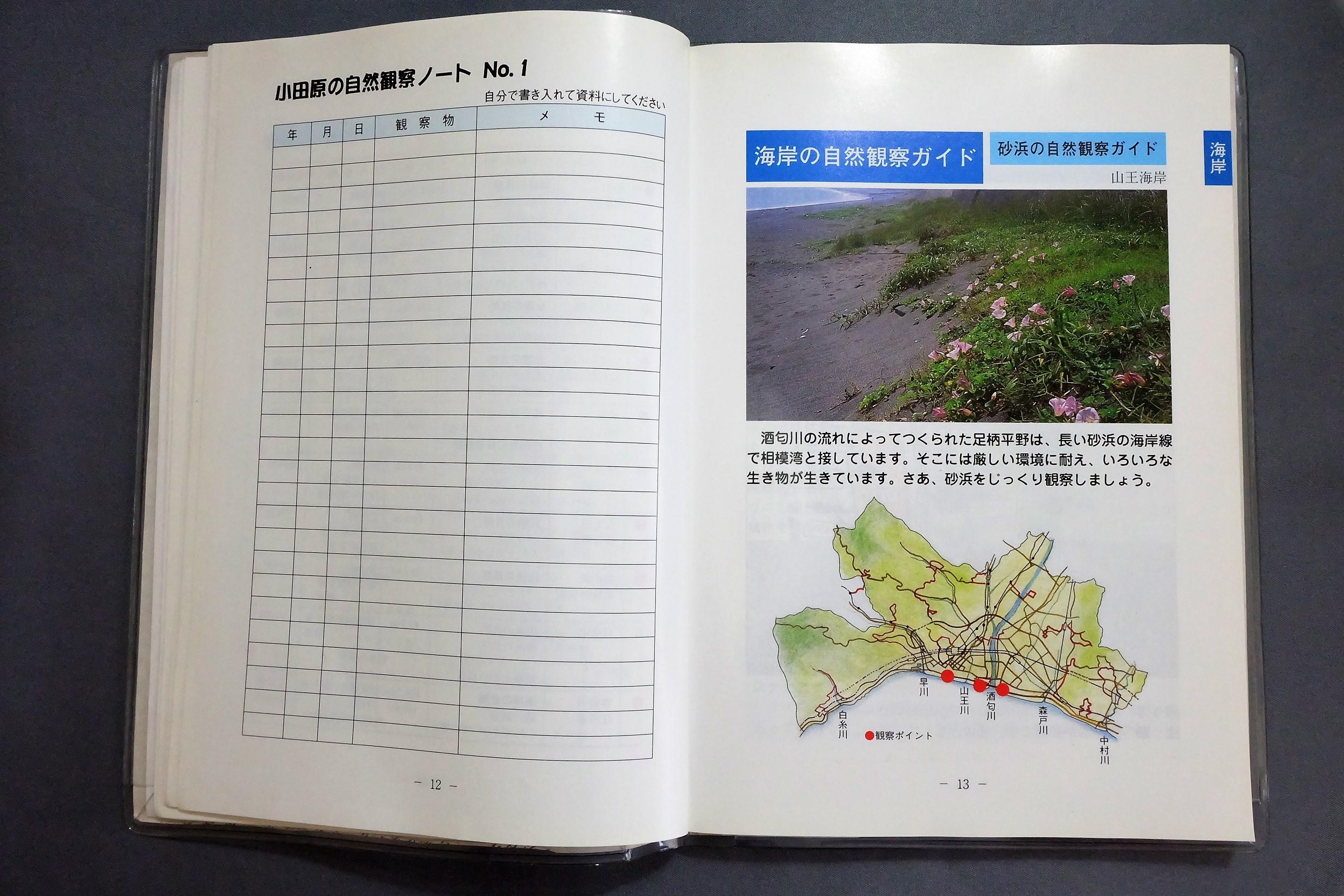 小田原の自然観察2