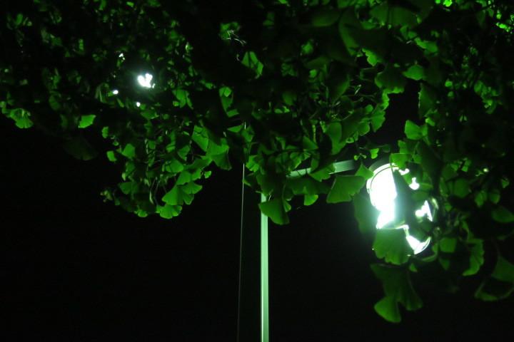 街灯写真4