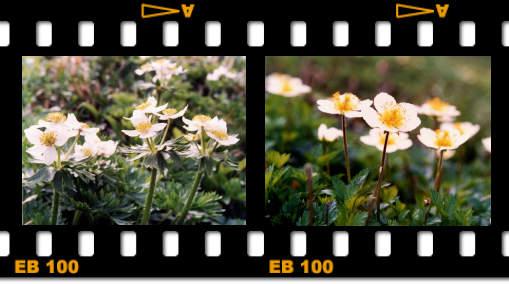 gardening132004.jpg