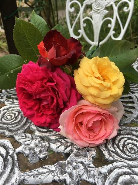 庭のバラ_2017072503