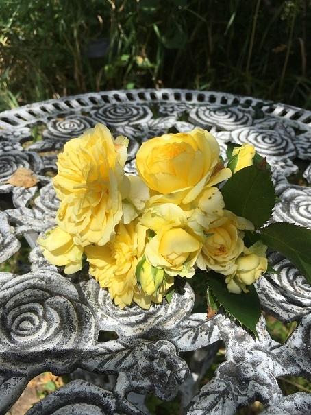 庭のバラ_2017072504