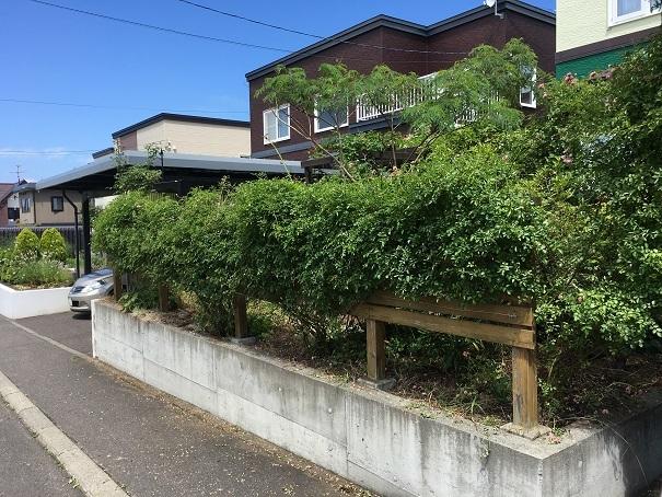 庭のバラ_2017072506