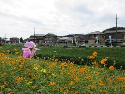IMG_0434 カカシ祭り