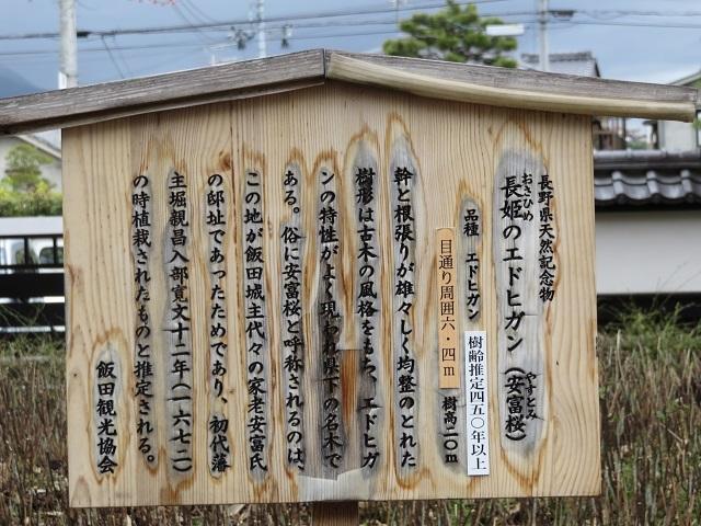 IMG_6564 安富桜