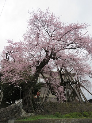 IMG_6611 桜丸御殿