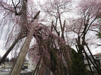 IMG_6616 桜丸御殿
