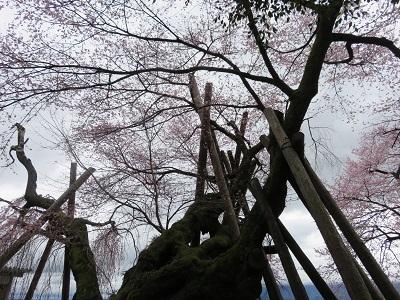 IMG_6617 桜丸御殿