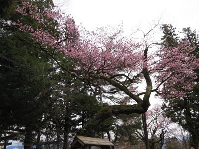 IMG_6652 愛宕稲荷神社
