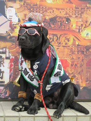 IMG_8001 祭り犬