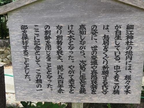 IMG_7949 細江神社