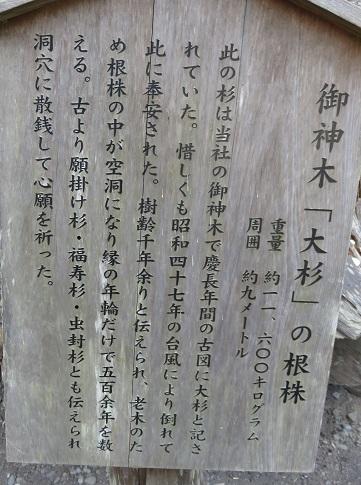 IMG_9887 大杉