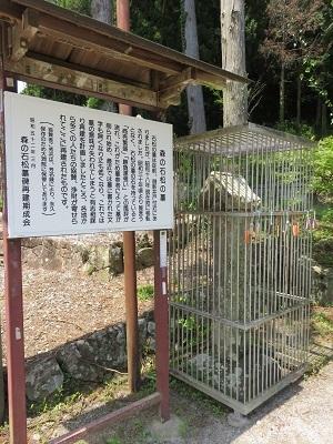 IMG_9935 石松の墓