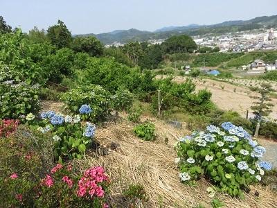 IMG_0071 香勝寺